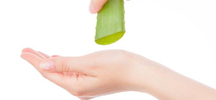 El aloe vera te ayuda a regenerar tu piel