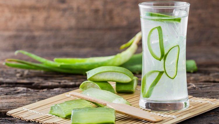 ¿Sabías que el aloe vera bebido contiene vitamina A, vitaminas del grupo B, vitamina C y E?