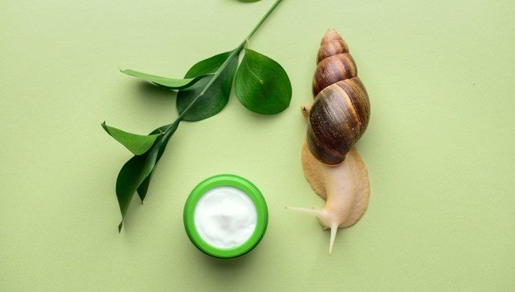 La baba de caracol también se utiliza en las cremas de belleza