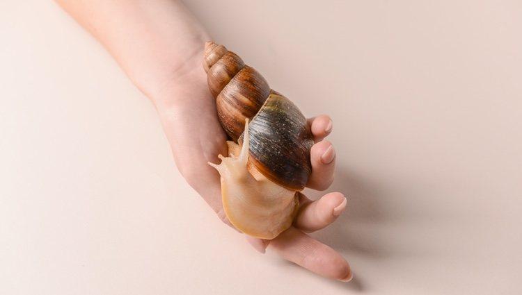 La crema de baba de caracol es una novedad en la industria cosmética
