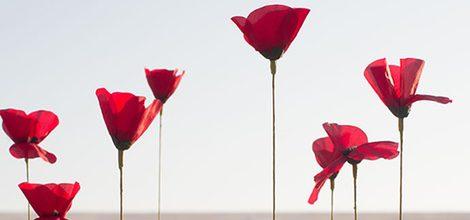 Imagen de amapolas rojas de la campaña de Kenzo