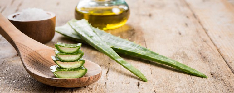 El aloe vera es uno de los mejores remedios caseros para curar una quemadura en la piel