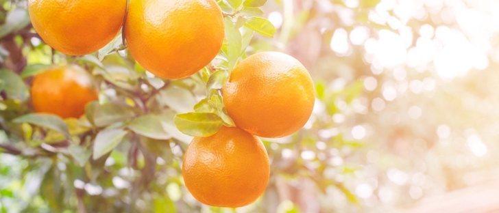 Como quitar una mancha de jugo de naranja