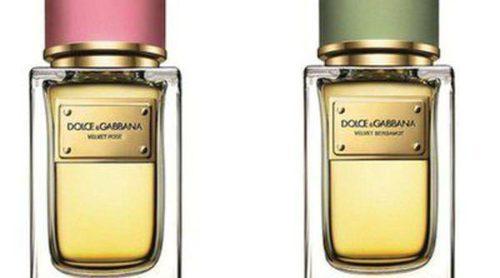 Velvet Rose y Velvet Bergamot, las nuevas fragancias de Dolce & Gabbana para verano 2014