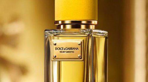 La familia 'Velvet' de Dolce & Gabbana tiene un nuevo integrante: 'Velvet Ginestra'