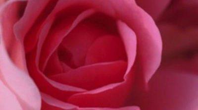 Los beneficios del agua de rosas en la piel